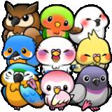 鸟类生活手机版下载 v1.6.14 最新版